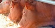 Especuladores suben el precio de la carne y no los productores
